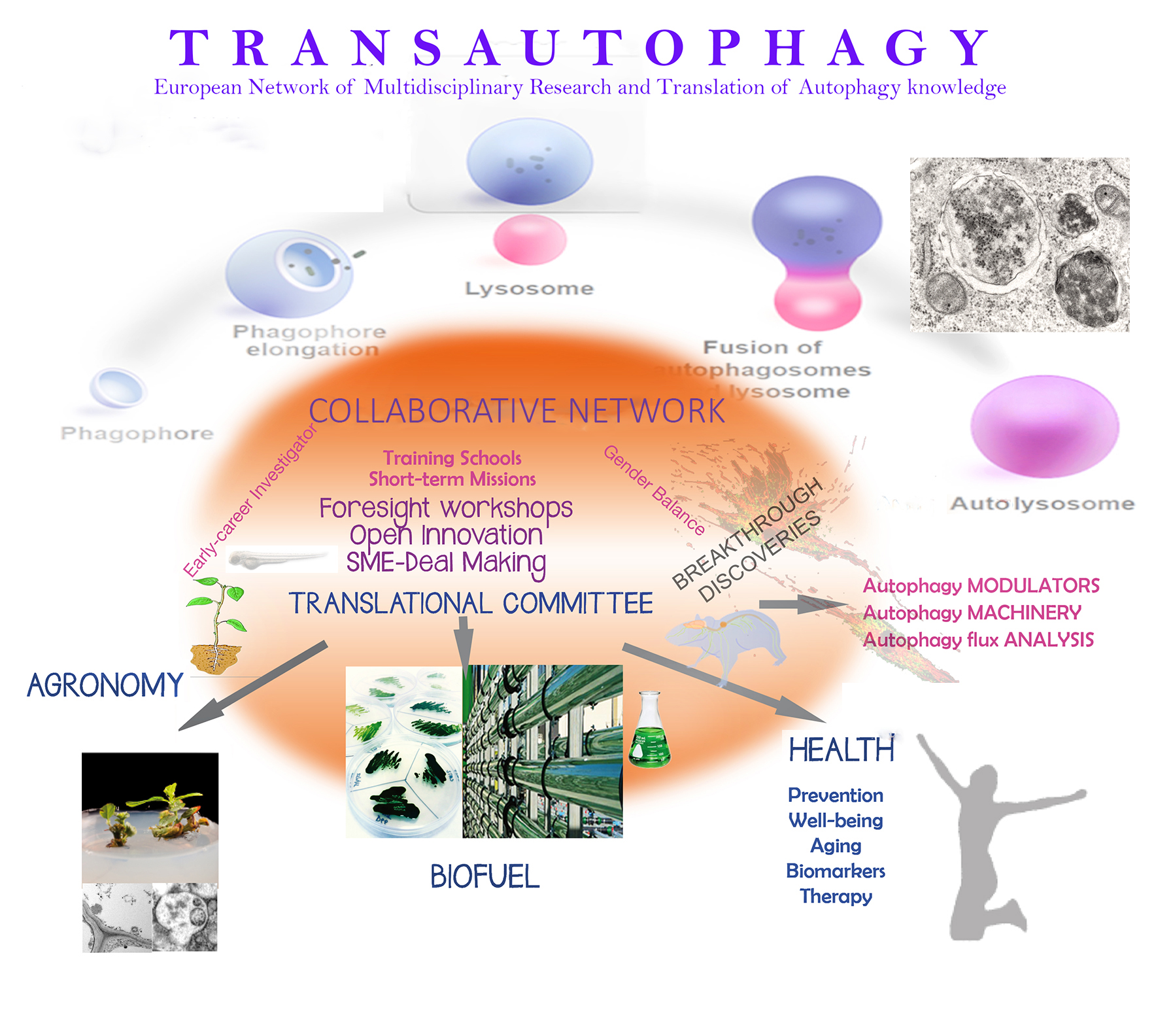 "Researchers of CIB participate in the first COST European Network on Autophagy ""TRANSAUTOPHAGY"", with applications in health, agriculture and energy"