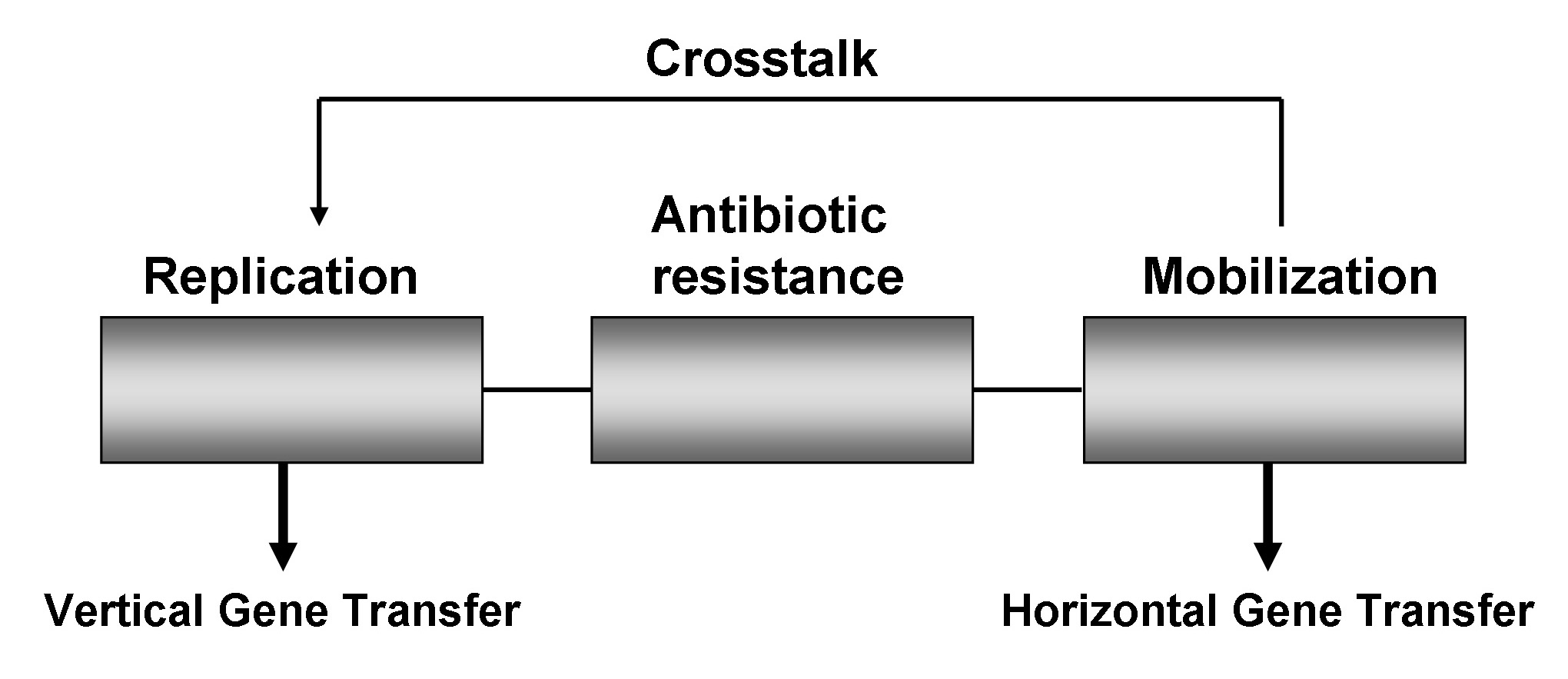 Crosstalk between vertical and horizontal gene transfer