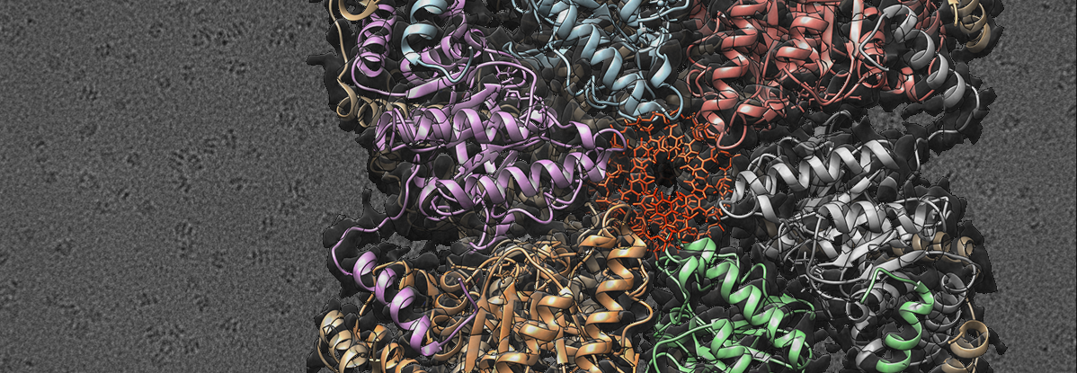 Unveiled the mechanism by which helicases load onto DNA